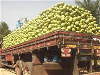 aliança distribuidora de coco verde