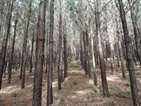Vendo área mais reflorestamento