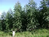 Floresta Excelente. OPORTUNIDADE