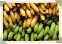 Bananas Nanicas