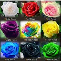 90 Sementes Rosas (preta,roxa,arco-íris,etc) Frete Grátis