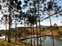 Fazenda em Bom Retiro com Área total de 509ha e com 40ha de Reflorestamento