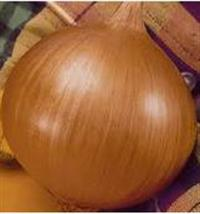 cebola amarela 6-7 cm