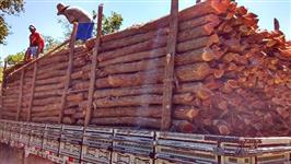 Manual Prático do Fazendeiro Florestal - Produzindo madeira de eucalipto com qualidade. Nessa cartil