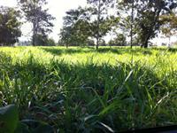 Fazenda de 203,53 em Babaçulandia-to
