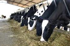 Compro Vacas ou novilhas de Leite