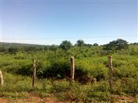 Fazenda em Tuntum - Maranhao - MA
