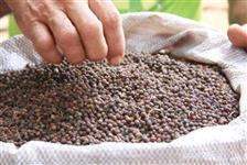 Pimenta do Reino em grãos
