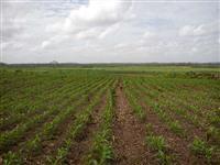 fazenda no maranhao