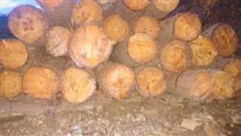 Madeira de pinus em geral
