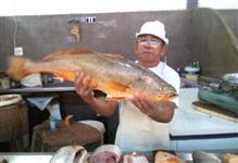 COMPRA PARA EXPORTAÇÃO-Pescada Amarela