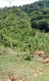 Sítio de 12,5 alqueires em São Luiz do Paraitinga-SP
