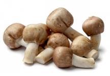 Procuro investidores para o setor de cogumelos