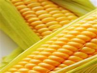 compra e venda de milho verde