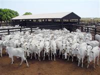 Crédito Rual para compra de Fazenda