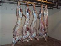 Carne selecionada de Carneiro e Cabrito
