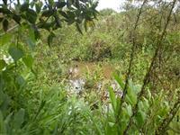 Terreno com Eucalipto e Água em Cláudio MG