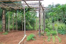 Chácara 2 hectares