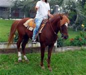 Excelente cavalo, calmo porem veloz