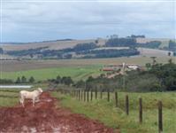 FAZENDA PRODUTIVA, AGRICULTURA E PECUÁRIA, ITAPEVA, SÃO PAULO