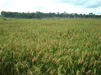 Fazenda 500 ha