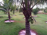 Chacara murada represa casa piscina bica dagua gramada ofuro Px Goiania