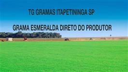 Grama Esmeralda direto do produtor para todo o Brasil