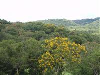 Área para compensação ambiental