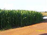 Fazenda em Ladainha - MG com 300 ha