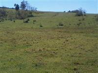 vende-se terreno rural área de 47 ha,atualmente somente com pastagem