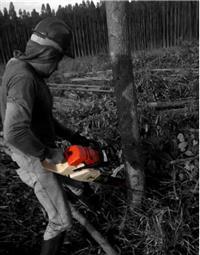 Serviços de corte de eucalipto