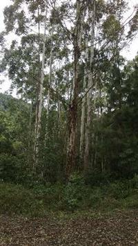Vendo um terreno de 400 ha. e um reflorestamento de 100.000 árvores ou mais