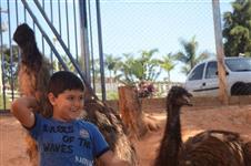 Emu Australiano [Ave muito dócil]