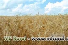 Farelo de trigo - Melhor preço