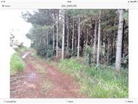 Fazenda próximo Guarapuava - Totalmente Estruturada