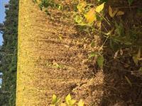 Venda de uma faz,Fazenda de 500hec para plantio de soja e de milho,