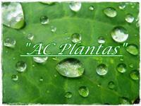 AC Plantas