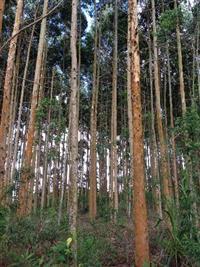 Fazenda para Reflorestamento / Pecuária / Irrigação em João Pinheiro - MG com 3000 ha.