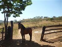 2 Cavalos Mansos