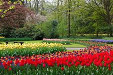 Flora Jardim e Servi�os