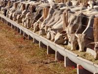 Ração Bovina (corte e leite) preço imbativel