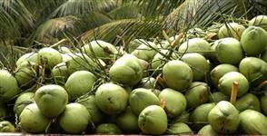 vendo coco verde região sul do espirito santo