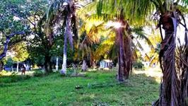 6.500ha Fralda de Pantanal - Pecuária