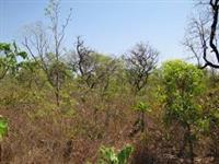 Cerrado - Compensação Ambiental - Bahia