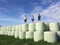 pre-secado tifton 85   500kg