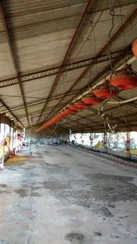 02 duas linhas automáticas completas para granjas de 100 metros