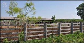 Fazenda em Bandeirantes - MS - Dupla aptidão