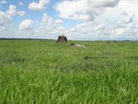 Fazenda MT Com 100.000.00 HCTR
