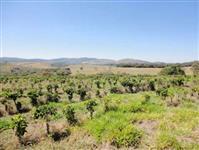 Fazenda MG 3.350 hectares (Café)