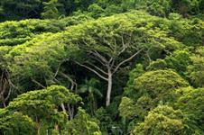 venda de área para compensação ambiental